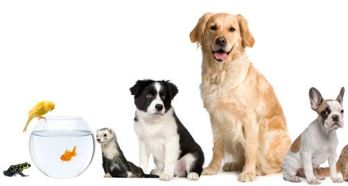 Cuidados para tus mascotas en Tres Cantos